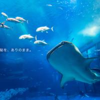 【九州編】おすすめの水族館10選♪夏のおでかけスポットに最適!