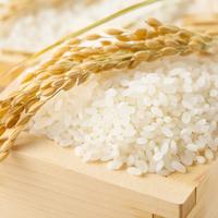 衝撃……新米なのに虫が!?「お米に虫がつく」原因と予防方法